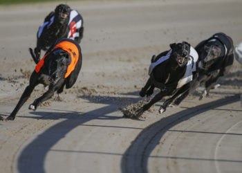 Hove dogs betting tips sports betting careers
